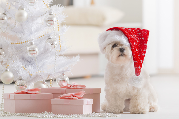 Little dog wearing Santa Claus hat
